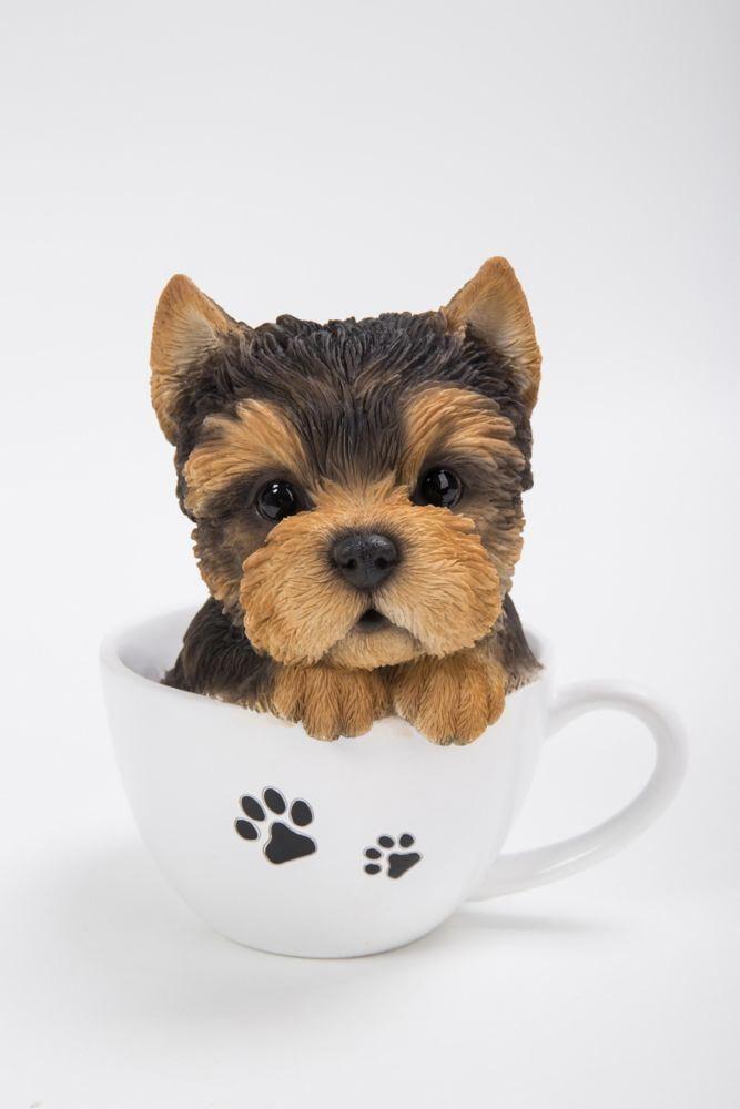 Mustlovedogs Dogsarefamily Animaladdicts Mustlovedogs Mykidshavefourpaws Livethelifeyoulove Yorkshire Terrier Dog Yorkshire Terrier Puppies Yorkshire Terrier