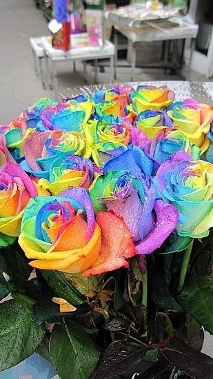 17 Best Images About Beautiful Flowers On Pinterest