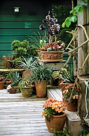 beautiful outdoor scape with lots of plants