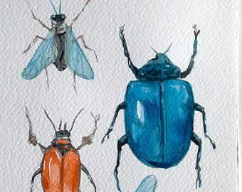 67 Best Bugs Botanicals And Boats Pen And Watercolor Images On Interesting Small Insects In Bathroom Design Ideas