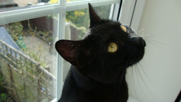 http://fosteringcats.co.uk/wp-content/uploads/2013/05/DSC02295.jpg