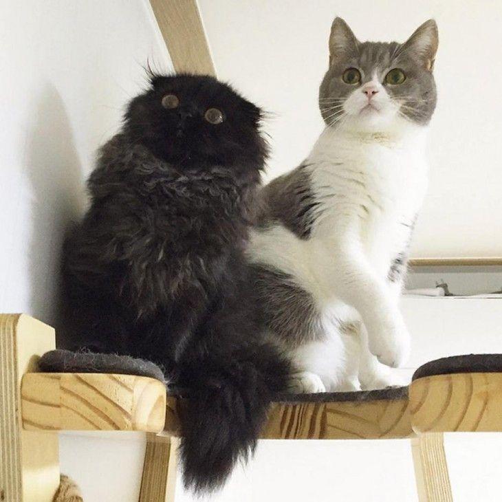 gimo con otro gato a su lado