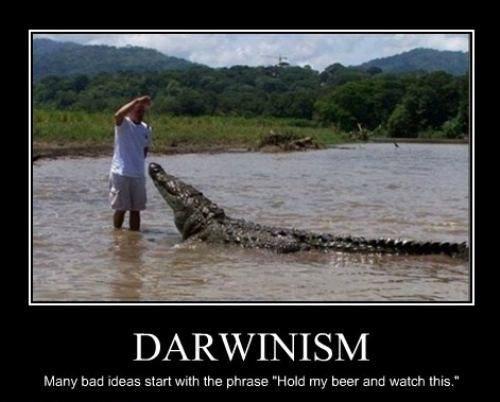 The Darwin Awards - Google Search