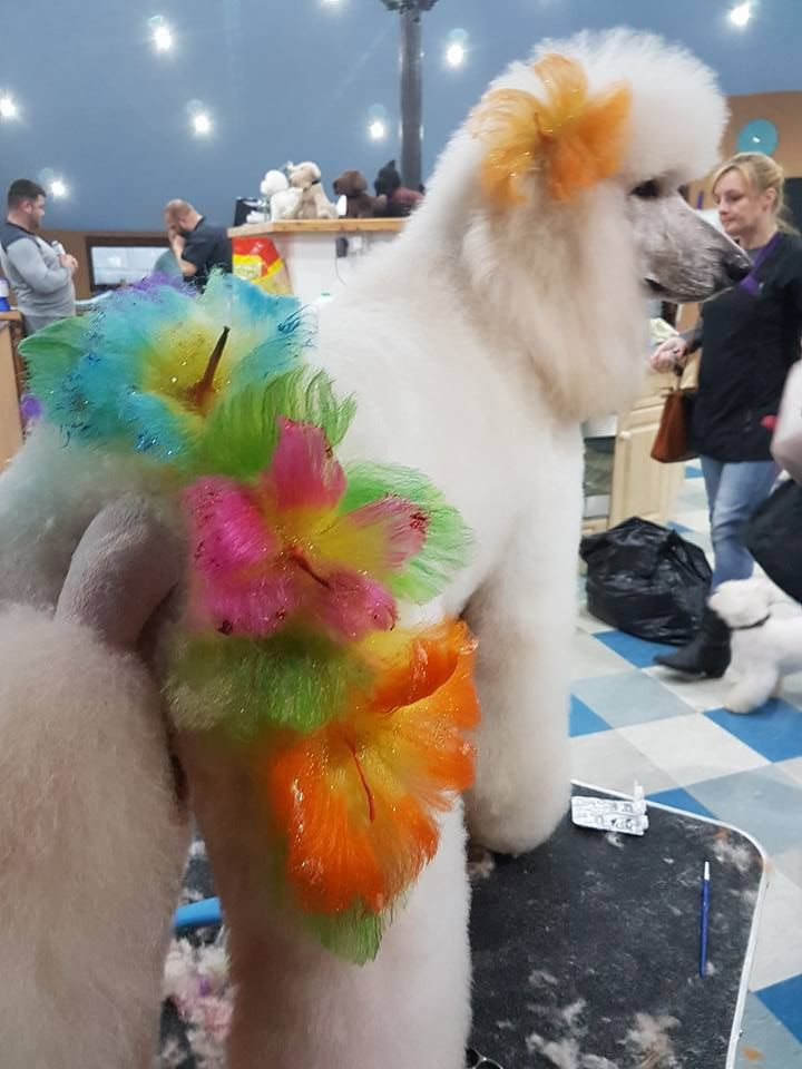 -repinned- Beautiful creative dog grooming