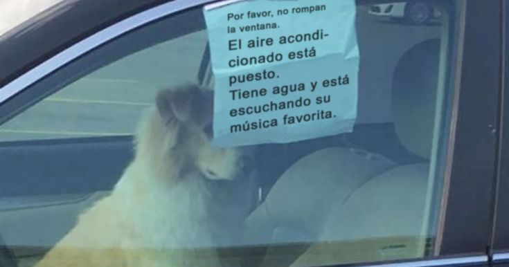 10+ Divertidos tuits sobre perros con los que te identificarás demasiado | Bored Panda