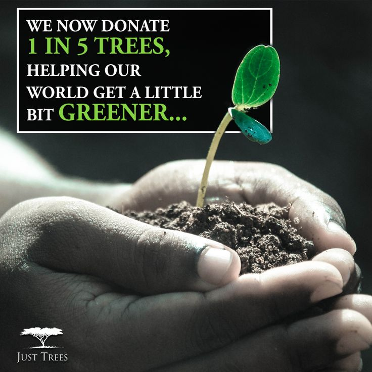 We have recently been able to change from donating 1 in 20 trees to 1 in 5 trees! Grateful we can contribute to greening the world and continue to share the wonder!
