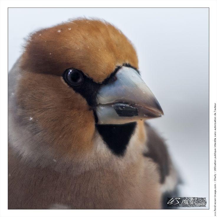 Les 14 meilleures images du tableau bec oiseaux sur for Oiseau a long bec