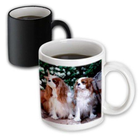 3dRose Two Blenheim Cavalier King Spaniel, Magic Transforming Mug, 11oz
