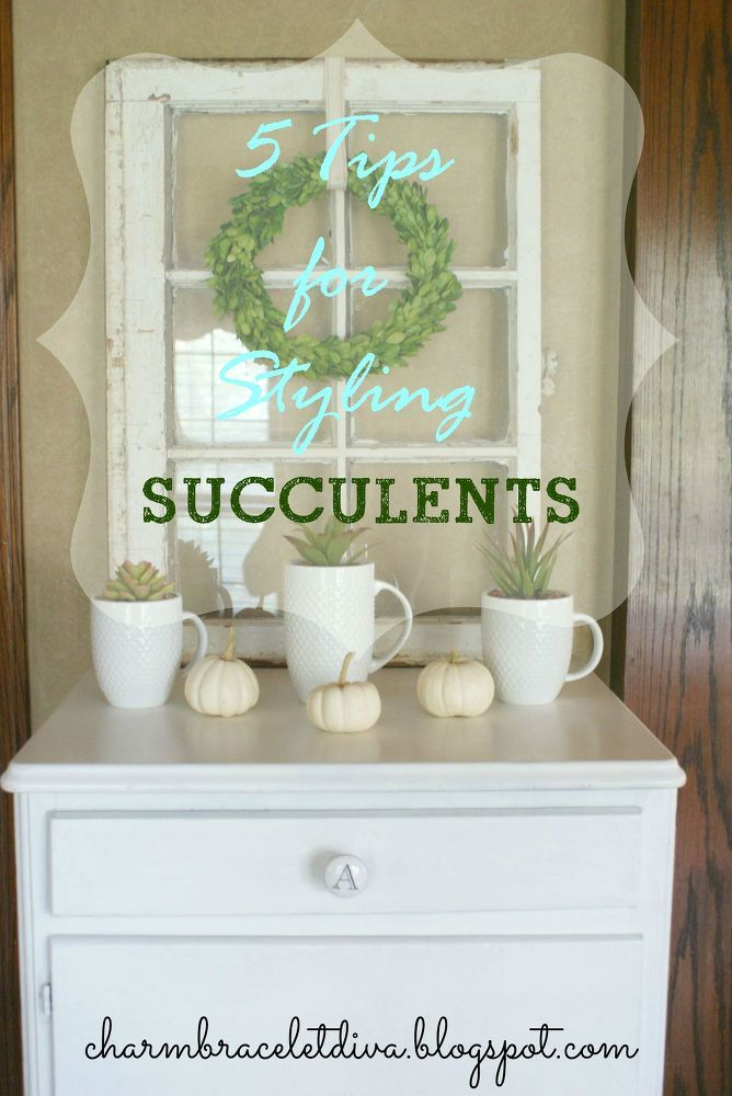 5 Styling Tips For Succulents