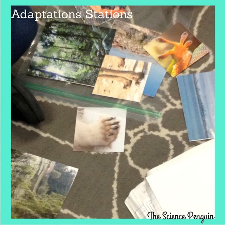 Science Penguin's Science Plans {Adaptations}