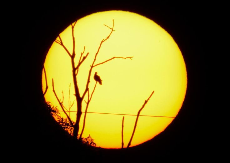 A bird sits on the branch of a tree silhouetted against the rising sun near Sehnde, Germany, September 18, 2014, in this deliberately underexposed picture. Indian summer, or Altweibersommer (old womens summer) in German, is a weather phenomenon which often brings sunny weather between mid-September and the start of October in parts of central Europe. (EPA/JULIAN STRATENSCHULTE)