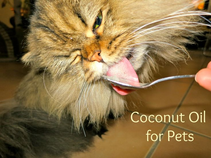Coconut oil for pets. How to prevent hairballs.  http://meowlifestyle.com/coconut-oil-hairball-remedy/