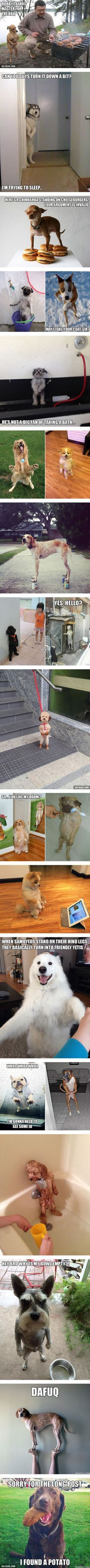 """Awkwardly Standing Dogs Hope you're doing well. From your friends at phoenix dog in home dog training""""k9katelynn"""" see more about Scottsdale dog training at k9katelynn.com! Pinterest with over 20,900 followers! Google plus with over 180,000 views! You tube with over 500 videos and 60,000 views!! LinkedIn over 9,300 associates! Proudly Serving the valley for 11 plus years! Now join us on instant gram! K9katelynn"""