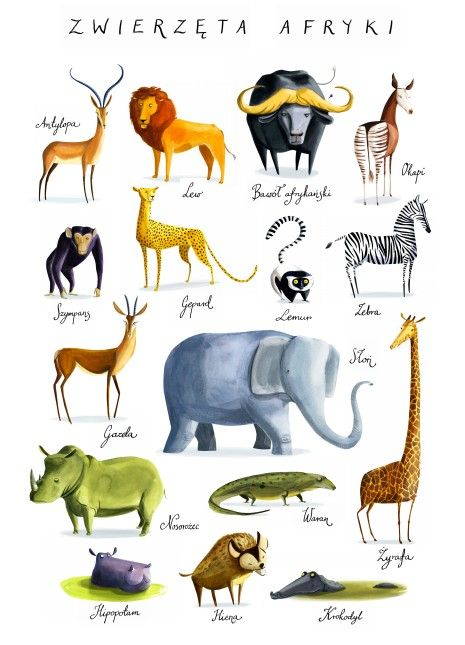 Plakat Zwierzęta Afryki - Joanna Rusinek