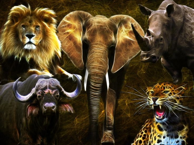 Tanzania - Kilimanjaro & National Parks  My second post is out now!  #Africa #EastAfrica #Tanzania #Kilimanjaro #Serengeti #Ngorongoro #Safari #Wildlife #BigFive #KingOfTheJungle #Simba