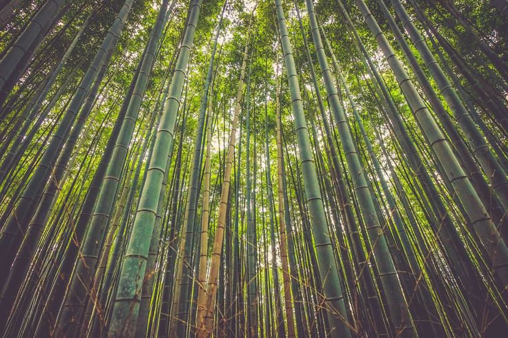 Following more than 60 years of work to repopulate forests across China, the country is now home to almost 70 million hectares of monoculture forest (often referred to as 'artificial' forest), the highest amount in the world. According to the head of the State Forestry Administration, Zhang Jianlong, afforestation work
