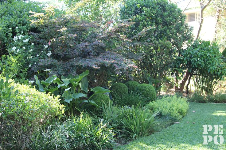 Cheltenham garden Maintained by Pepo Botanic Design