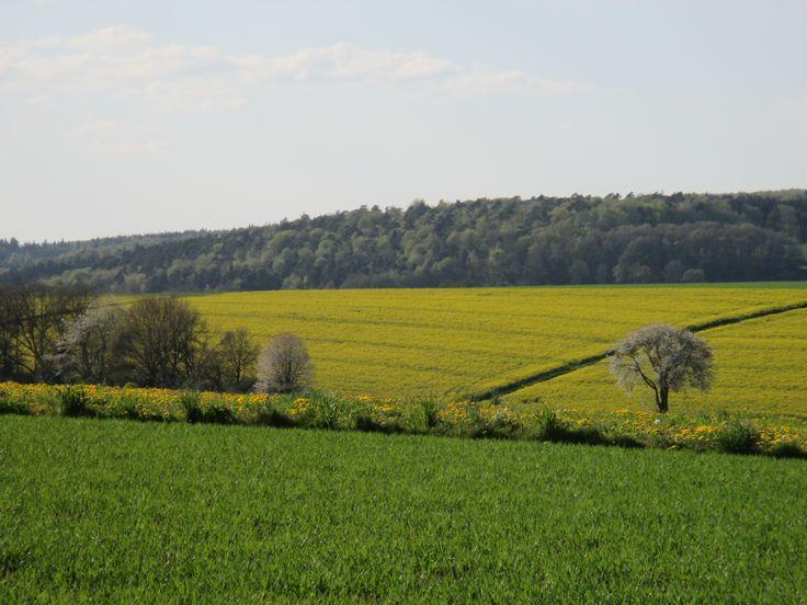 Goldgelbe Felder in Nordhessen