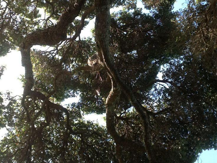 My environment (tree)