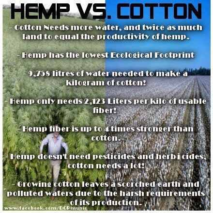 Hemp Can Free Us From Oil, Prevent Deforestation and Cure Cancer – So Why Is It Illegal?