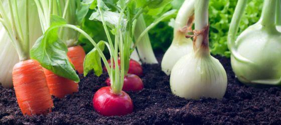 Cerchi un passatempo in città? La Coldiretti ha individuato 10 mosse per creare un orto perfetto.