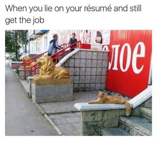 Lie on the CV, Get The Job...