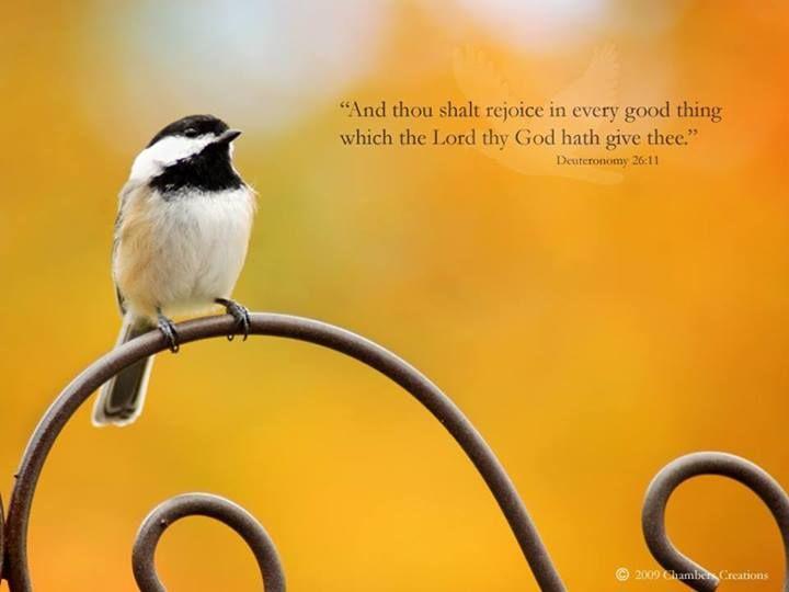 Deuteronomy 26:11   https://www.facebook.com/photo.php?fbid=10151782643383091