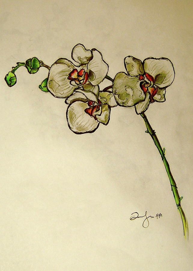 Orchid Drawing by Emily Jones - I really like this