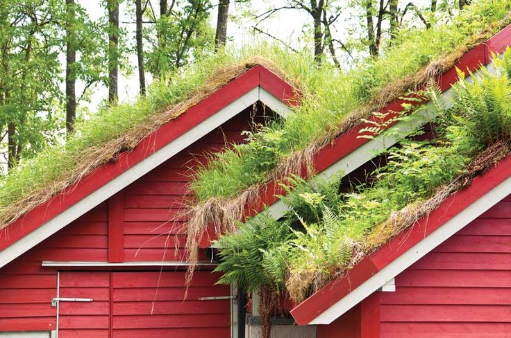 Green roof on outbuildings