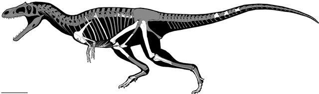An article published in the journal PLOS ONE describes the discovery of a theropod dinosaur that was called Gualicho shinyae. It's been classified in the group of carnosaurs and what makes it particularly interesting is that its arms are small like those of the more famous Tyrannosaurus rex, classified in another group of theropods. This suggests that this feature evolved a number of times independently. Read the details in the article!