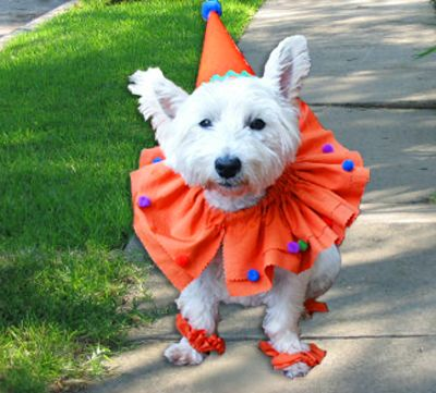 How-To Dog Clown Costume from Ritsters Rit Fabric Dye Clothing Dyeing. How to dye then cut + sew this clown collar that slips through your own dog's collar so he won't be THAT annoyed.