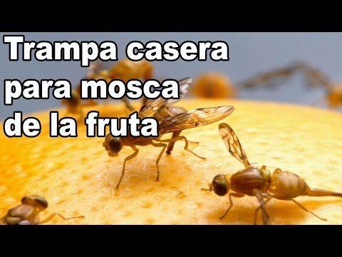 Remedio casero contra la mosca de la fruta - YouTube