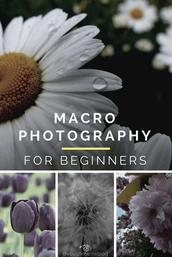10 Macro Photography 10 Macro Photography Tips for Beginners. Easy steps to take your macro photography to the next level. Macro Photography | Ideas |…