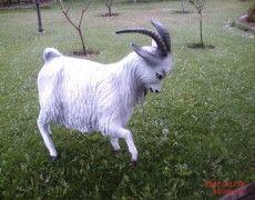 Butt Goat Statue