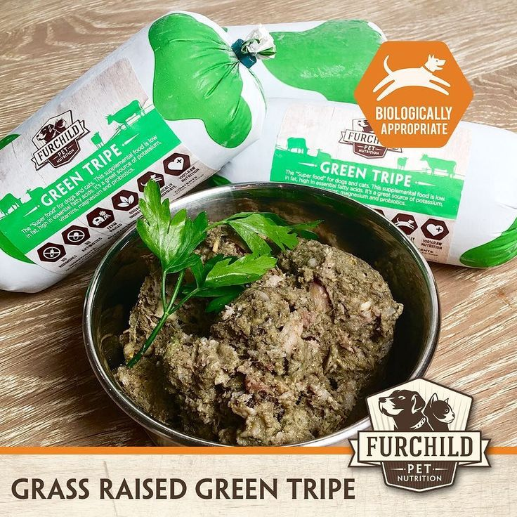 GREEN TRIPEGREEN TRIPEGREEN TRIPE . Whether you feed kibble cooked or raw food Grass-Raised Green Tripe is a must for every pet. The benefits are endless - it doesn't get any better than this wonderfully aromatic meat!  . www.furchildpets.com | orders@furchildpets.com | 04 .  Read our blog: http://ift.tt/2lKamY9 . #greentripe #livelong #probiotics #digestiveenzymes #fresh #raw #uaedogs #uaecats #furchildpets #tasty #healthy #mydubai #newtouae #favoritepetfood