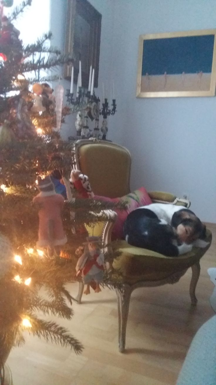 Christmas 2017 - Duchess Lucy asleep in her chair