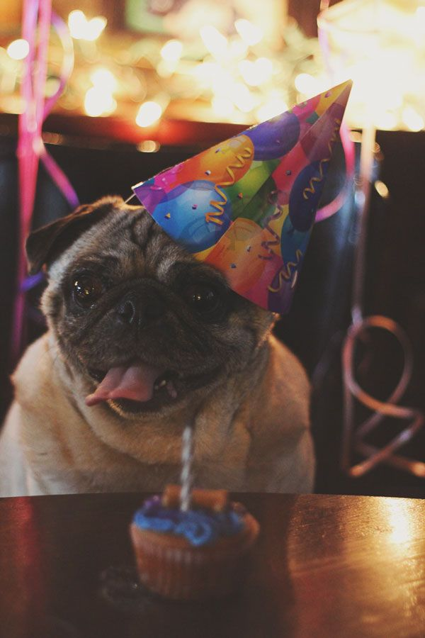 Pug birthday party | Pug | Pinterest | Pug, Parties and ...