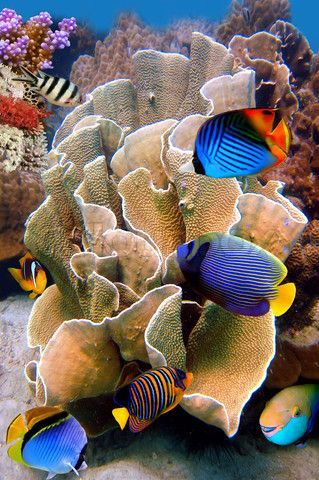 Tropical Fish near Colorful Coral Reef stock photo