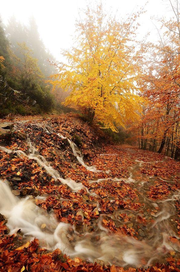 O Outono na Serra da Estrela é lindo ... para mim a mais bonita estação, e que menos gente aproveita