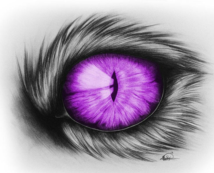 Purple House Cat Eye Drawing Canvas Print Canvas Art By