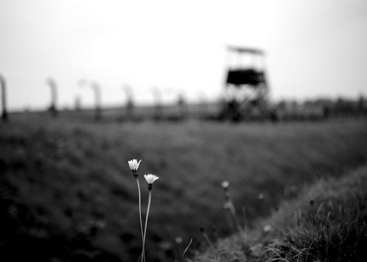 B&W impression. Flowers and wires...