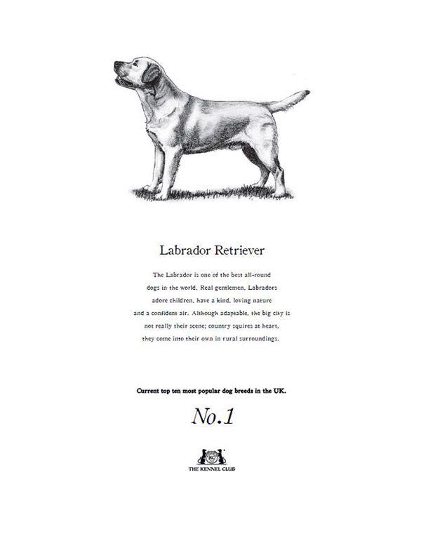 Labrador Retriever Tea Towel The Kennel Club Official Shop