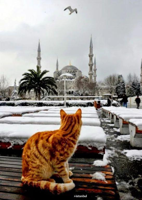 Fotoğraf: Karlı Bir Sultan Ahmet Camii Manzarası.