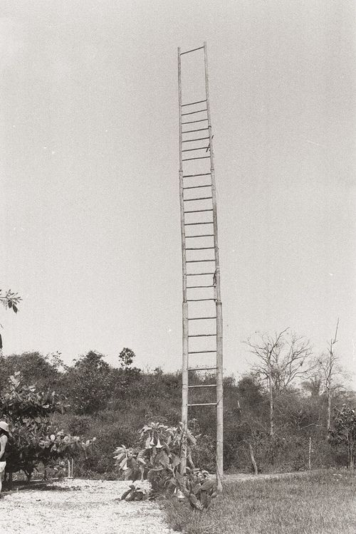 ladder to the moon: