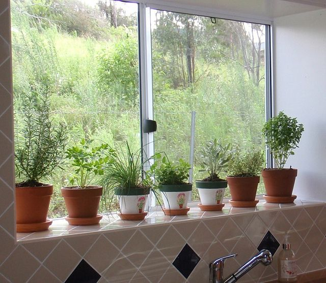Mini Hortinha Na Cozinha Gardening Garden Herb Garden Herbs