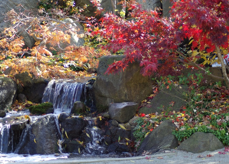 Anderson Japanese Gardens Rockford Il Things To Do Places To Go Pinterest