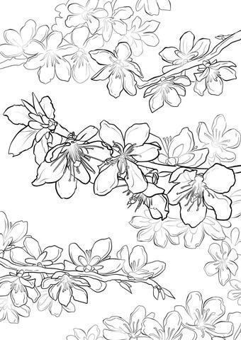 Ausmalbild: Pfirsichblüten. Kategorien: Obstbäme. Kostenlose Ausmalbilder in einer Vielzahl von Themenbereichen, zum Ausdrucken und Anmalen.