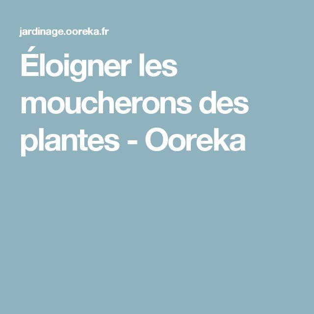 Éloigner les moucherons des plantes - Ooreka