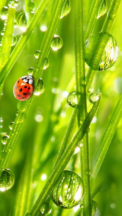 I miss the days of hunting for ladybugs at the park then releasing them in the backyard.