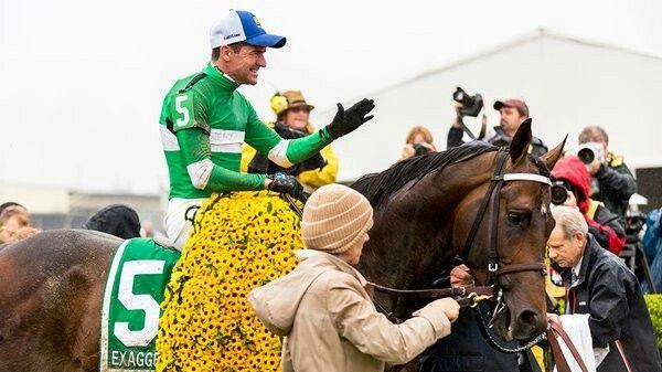 Exaggerator. 2016 Preakness Stakes winner. Jockey: Kent Desormeaux, winning time: 1:58:31